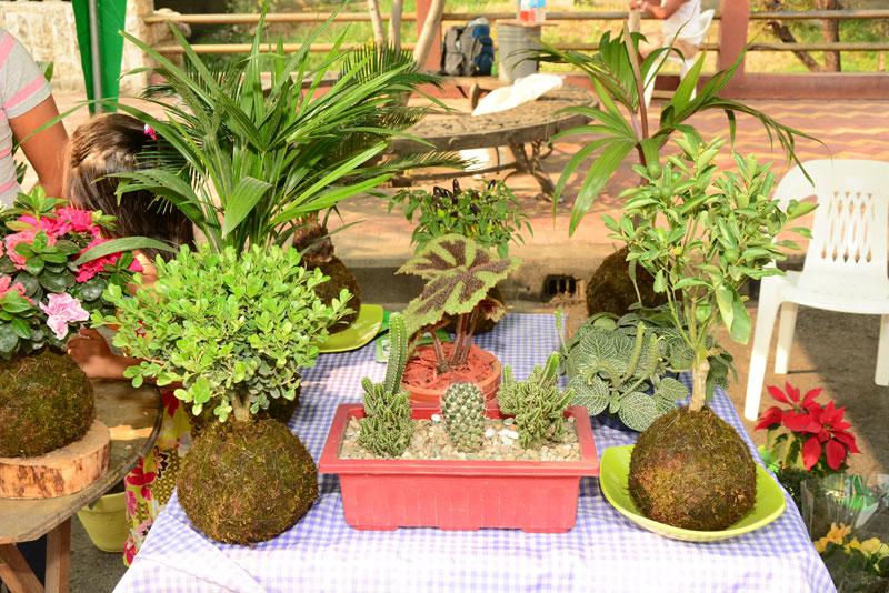 Variedad de plantas ornamentales de milagro fue expuesta for Imagenes de viveros de plantas ornamentales